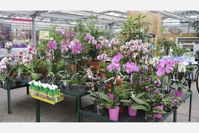Orchideenzentrum Wichmann Celle